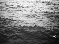 """Il Fieno, """"Riverberi"""": la recensione"""