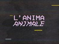 """Onorata Società, """"L'Anima Animale"""": la recensione"""